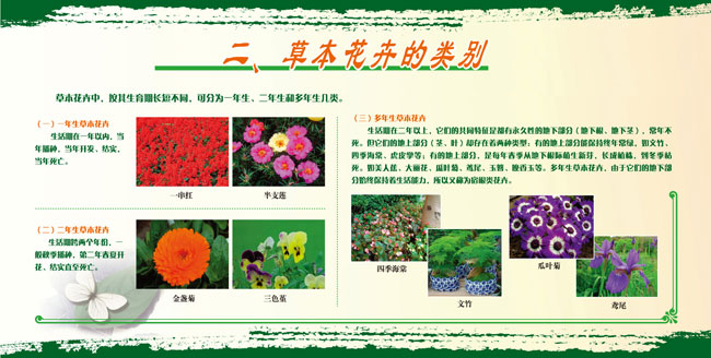 展板2.草本花卉的类别