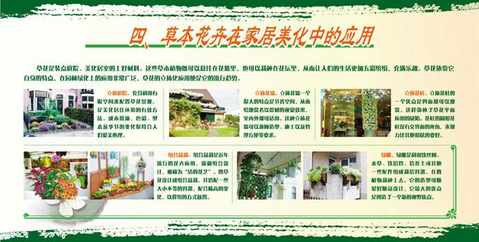 展板4.草本花卉在家居美化中的应用