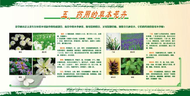 展板5.药用的草本花卉
