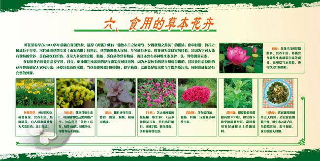 展板6.食用的草本花卉