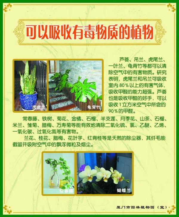 展板07-可以吸收有毒物质的植物