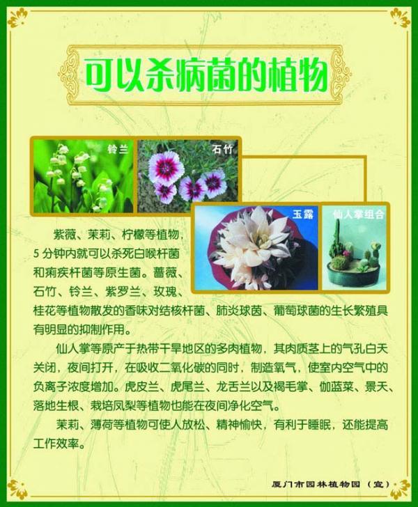 展板  09-可以杀病菌的植物