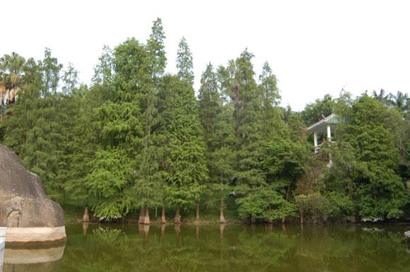 棕榈植物区