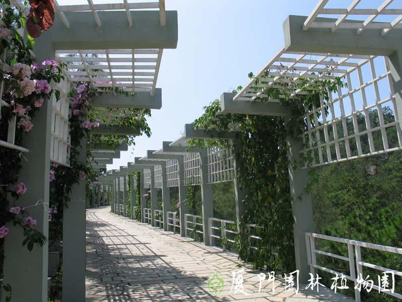 藤本植物区
