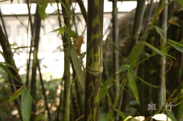 竹类植物区
